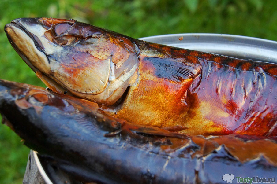 Рецепты копчения мяса горячего копчения