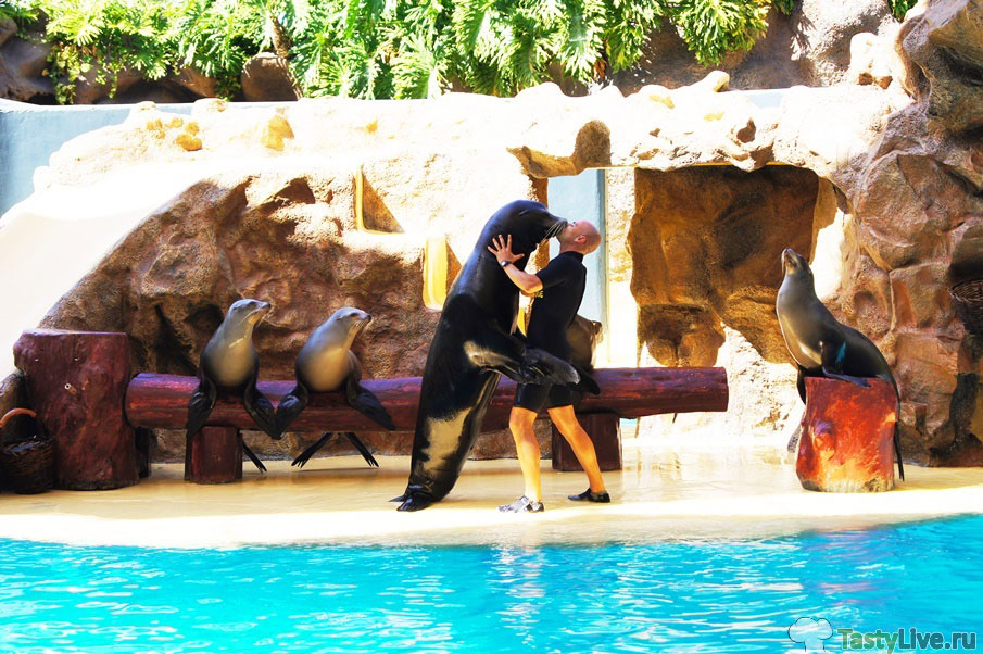 Шоу морских львов. Лоро парк. Тенерифе.