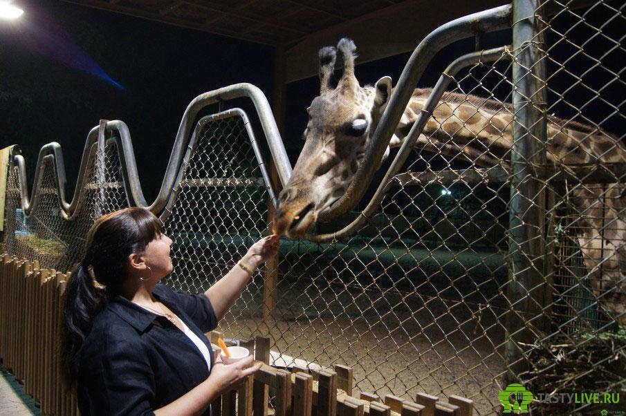 Зоопарк в ОАЭ