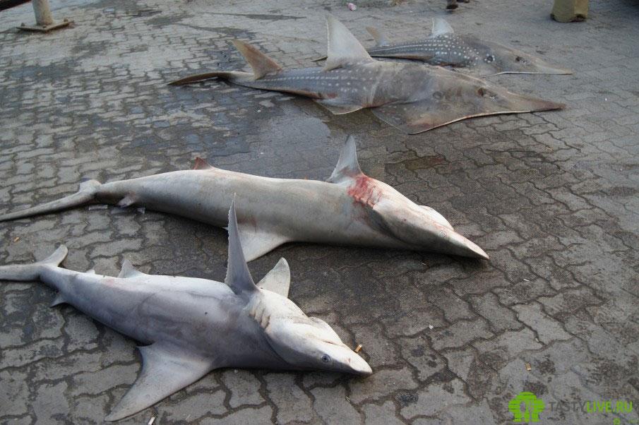 Рыбацкий рынок в Омане